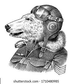 Polar bear dressed up in pilot or airman. Flyboy or skyman. Fashion Animal character sketch. Hand drawn Anthropomorphism. Vector engraved illustration for label, logo and T-shirts or tattoo.