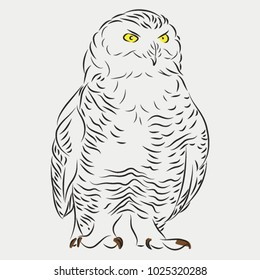 polar owl sketch, vector illustration