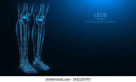 Polygonal anatomical vector illustration of human legs. Femur, patella, tibia, fibula, and foot bones. Low poly model of human legs. The concept of a medical template.