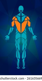 Polygonal anatomy of male muscular system, exercise and muscle guide. Human muscle vector art, back view. Vector illustration for sport equipment