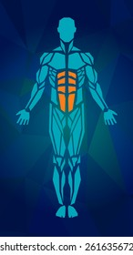 Polygonal anatomy of male muscular system, exercise and muscle guide. Human muscle vector art, front view. Vector illustration for sport equipment