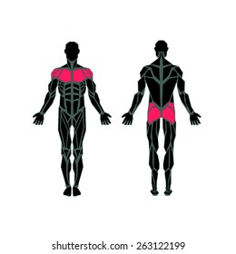 Polygonal anatomy of male muscular system, exercise and muscle guide. Human muscle vector art, front view, back view. Vector illustration