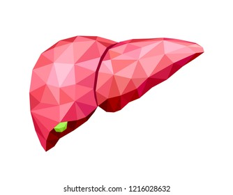 polygonal art of human liver design. Abstract anatomy organ. World Hepatitis Day. Illustration isolated on white background.