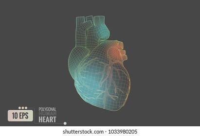 Polygonal colorful wireframe line of human heart glowing isolated on gray background