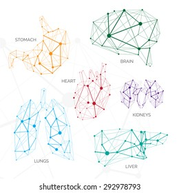 Polygonal minimalistic color organs with data contains brains, liver, lungs, kidneys, heart