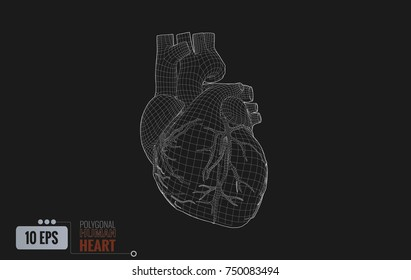Polygonal white wireframe line of human heart illustration isolated on black background