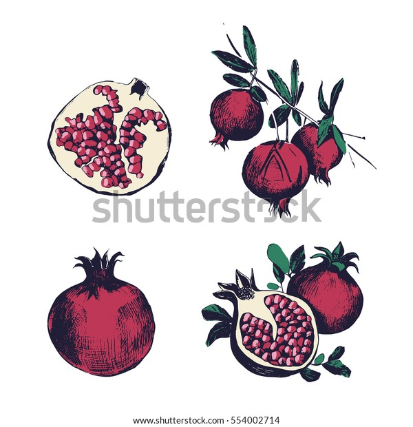 Pomegranate hand drawn set. Collection on white background, isolated : fruit whole, cutaway, on a branch. Vector colorful vintage style illustration.