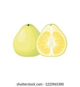 pomelo isolated on white background. Bright vector illustration of colorful half and whole of juicy pomelo. Fresh cartoon