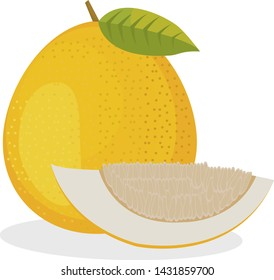 pomelo isolated on white background. Bright vector illustration of colorful half and whole of juicy pomelo.