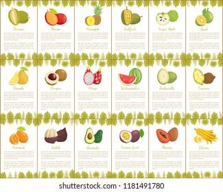 Pomelo and longan, coconut and citron, passion fruit and mango slice. Carambola and cupuacu, papaya and watermelon, salak and marang posters vector