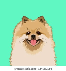 Pomeranian, The buddy dog