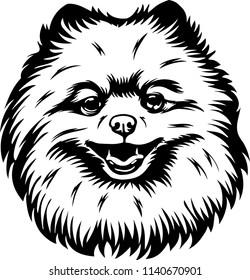 Pomeranian dog breed pet