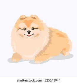pomeranian dog at one color background