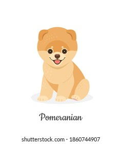 Pomeranian dog. Vector illustration of cute fluffy puppy in flat style. Isolated on white