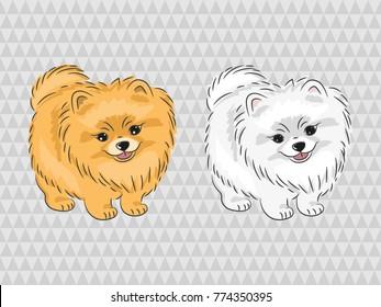 Pomeranian dog. Vector illustration of cute puppy.