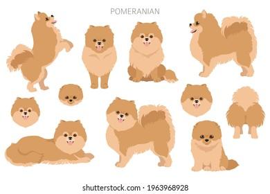 Pomeranian German spitz clipart. Different poses, coat colors set.  Vector illustration