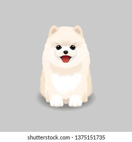 Pomeranian Puppy Vector Illustration. Dog isolated