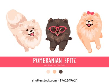 Pomeranian Spitz cream, orange and dark isolated on white background. Cute Poms puppies. Small German spitz. Little dogs. Vector stock illustration. Fluffy pets. Domestic animals in cartoon style.