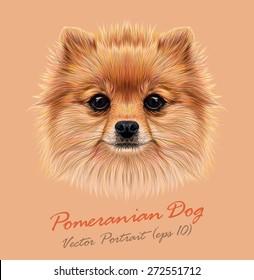 Pomeranian spitz dog animal cute face. Vector funny puppy head portrait. Realistic fur portrait of Pomeranian dog isolated on beige background.