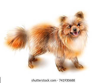 Pomeranian spitz. Dog is the symbol of the Chinese calendar 2018. Animal of 2018. 2018 is the year of the dog.   Animal of the Chinese new year.