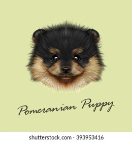 Pomeranian Spitz dog vector illustrated portrait. Cute face of puppy on green background.