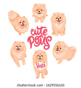 Pomeranian Spitz set isolated on white background. Cute Poms puppies. Small German spitz. Little Fluffy and fashion pets in cartoon style. Ideal for stickers, dog salon or animals shop logo.