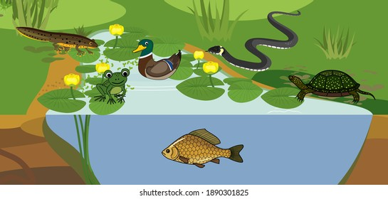 Pond biotope with different animals (bird, reptile, fish, amphibians) in their natural habitat