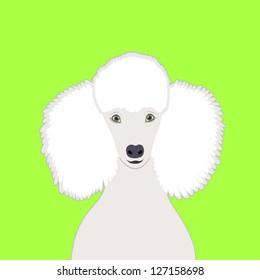 Poodle, The buddy dog