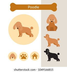 Poodle Dog Breed Infographic, Illustration, Front and Side View, Icon