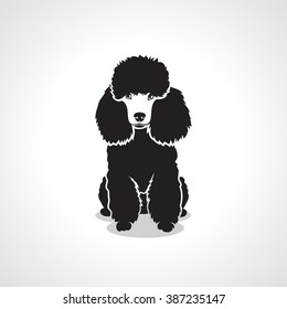 Poodle dog - vector illustration