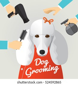 Poodle getting groomed at pet grooming salon.