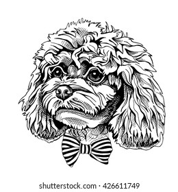 Poodle puppy portrait with a bow. Vector illustration.