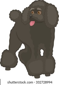 Poodle Vector Illustration