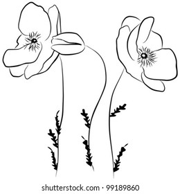 poppies flower - freehand on a white background, vector illustration