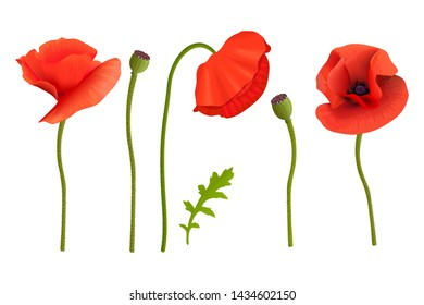 Poppies flowers and Stems. Wallpaper picture. Remembrance Day. For aromatherapy, wrapping, postcards, packaging, cards, perfumery cosmetics flowers frame template web label tags