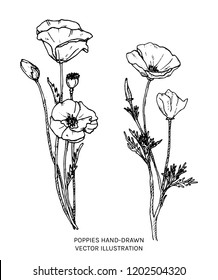 Poppies hand drawn ink illustration. Vector black and white floral drawing of oriental poppy and california poppy