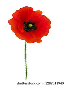 Poppy. Beautiful bright realistic flowers of red color on a white background. Vector illustration.