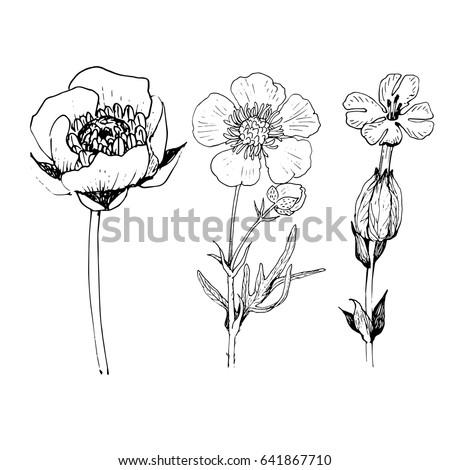 Poppy flower drawing vector illustration line stock vector royalty poppy flower drawing vector illustration and line art illustration black ink for tattoo design mightylinksfo
