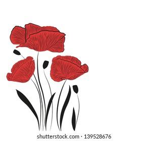 Poppy flower on white