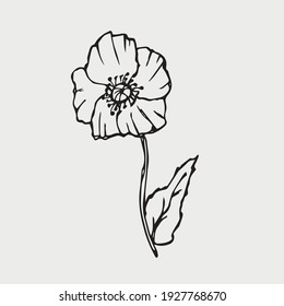 Poppy flower sketch. Simple summer doodle of a plant. Vector freehand line illustration