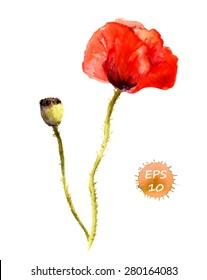 Poppy flower. Watercolor vector