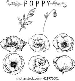 poppy flowers  drawings vector