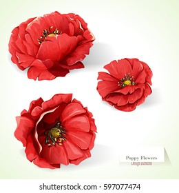 Poppy flowers. Illustration of three poppy buds. Watercolor. Hand drawn. Vector - stock.