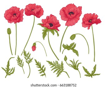 Poppy flowers. Set of colored flowers.