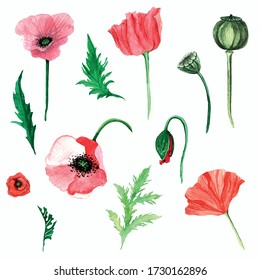 Poppy meadow flowers watercolor painted hand drawn illustration. Set of poppy flowers stickers.