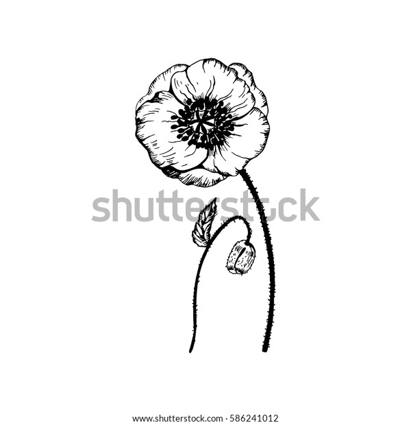 Poppy Vector Wildflowers Collection Outline Style Stock Vector