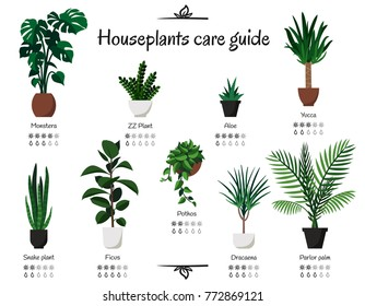 Popular, common houseplants care guide. Vector isolated collection of various indoor ornamental plants with watering and lighting norms. Monstera, parlor palm, ficus, pothos, aloe, snake plant, yucca