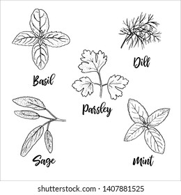 Popular fresh culinary herbs silhouettes. Basil, mint, sage, dill, parsley. Ink pen sketch style. Vector illustration. For prints posters perfume, cosmetics design, healthcare, medicine, cooking tag l