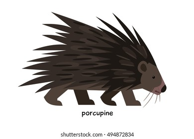 Porcupine with long spines on the back