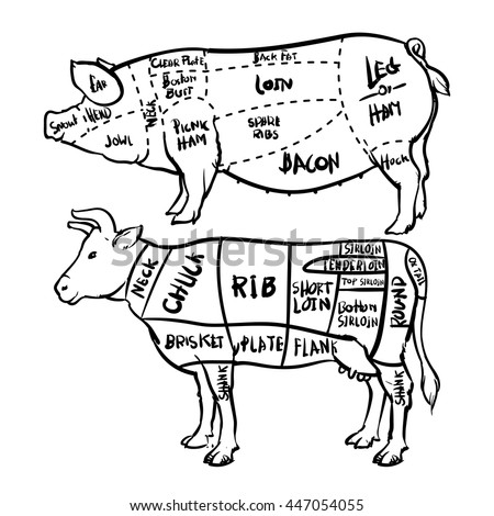 Outline Beef Diagram Product Wiring Diagrams